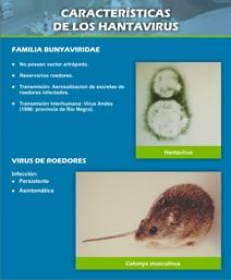 Caracteristicas de los Hantavirus